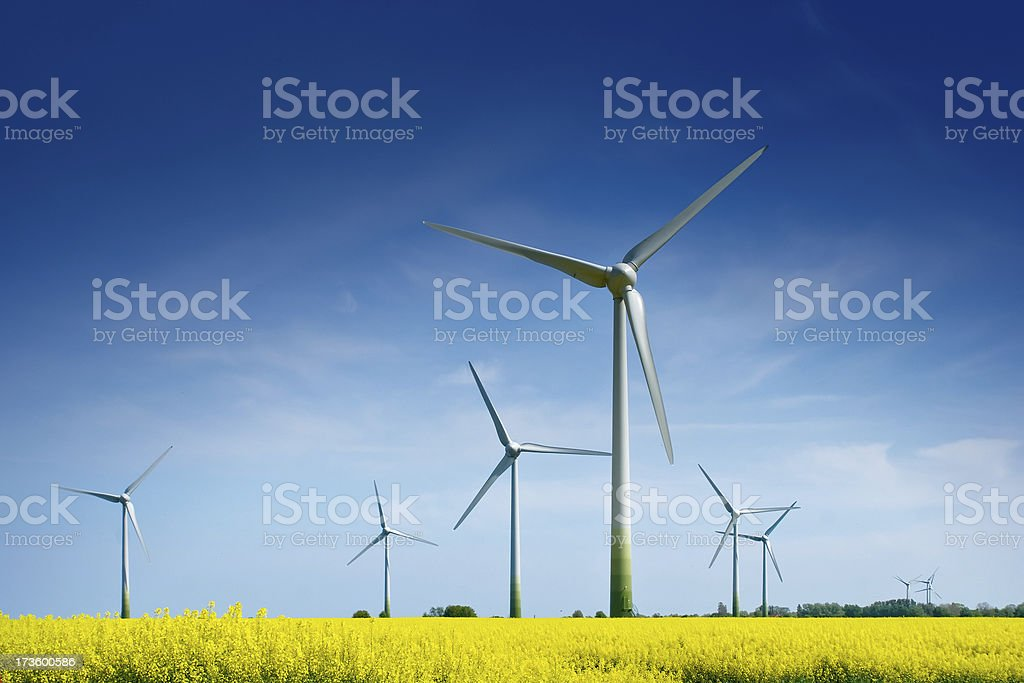 Wind Turbines in a Rape Field stock photo