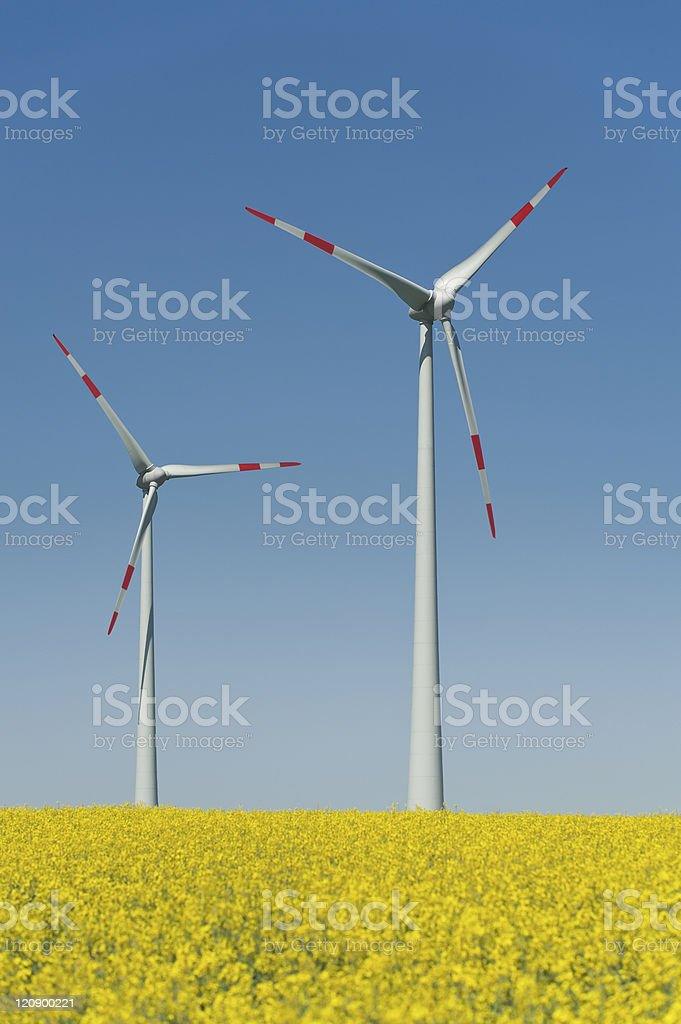 Wind turbines in a rapeseed field stock photo