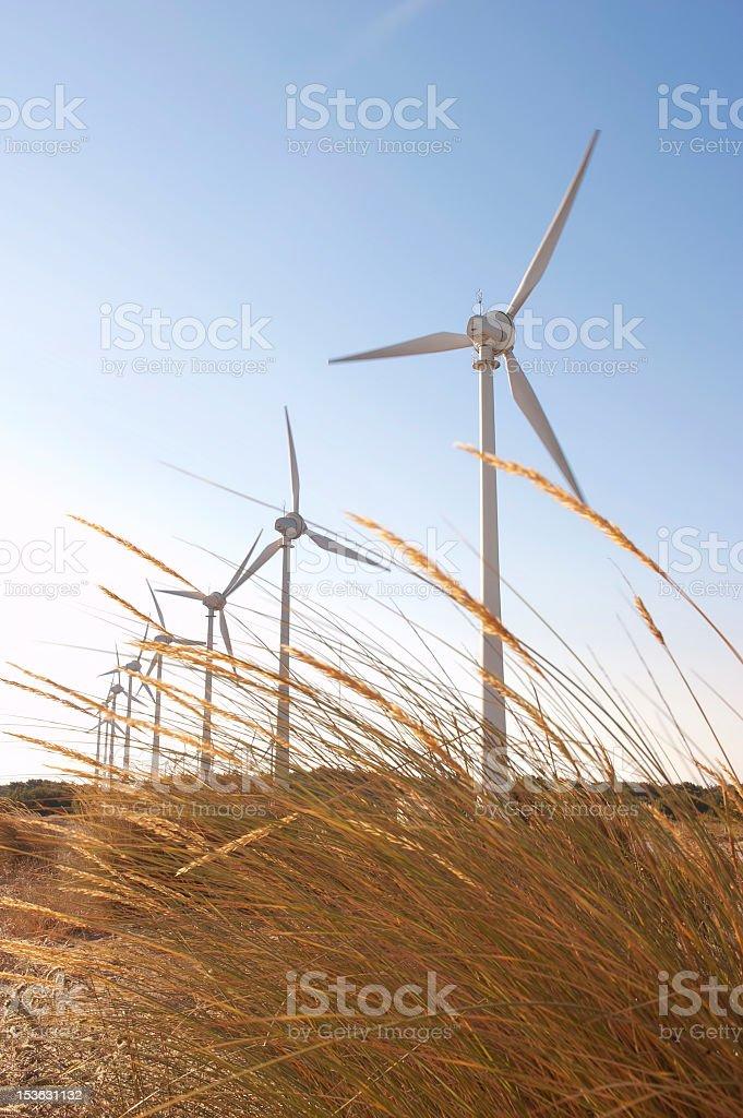 Wind turbines in wheat field royalty-free stock photo
