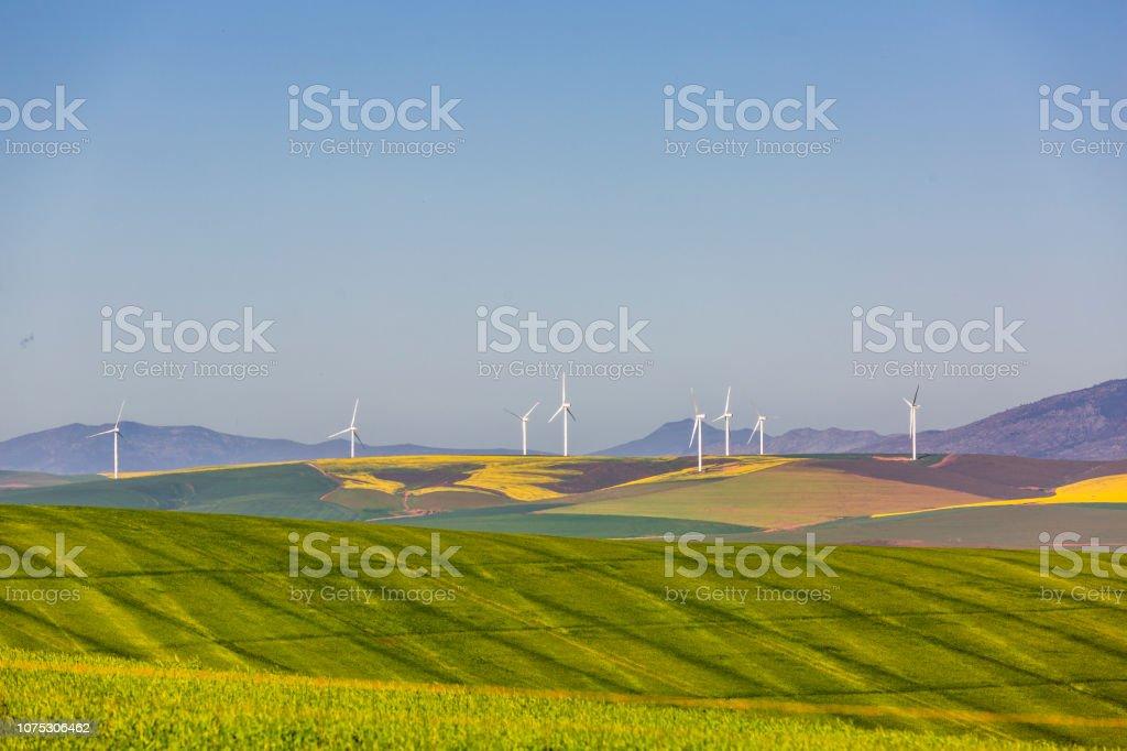 Wind turbines in yellow field. Sustainable energy stock photo