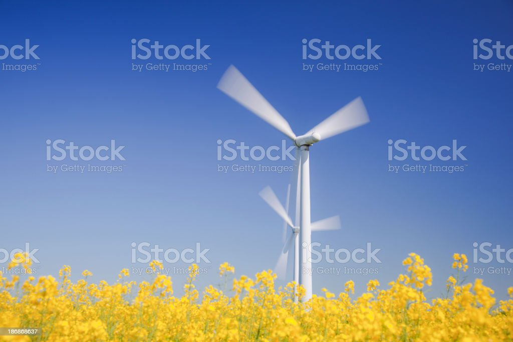 Wind turbines in yellow field. Sustainable energy. Polarized blue sky. royalty-free stock photo