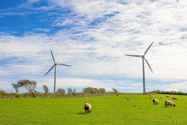 Wind turbines  on farm with animals,on top of the hill with blue and cloudy sky in background.Ecological green energy production.Care for natural environment.North Wales,Uk.Environment friendly solution. stock photo
