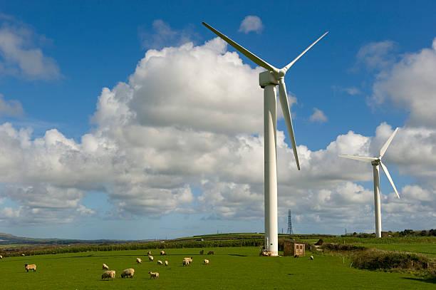 Windturbinen mit Schafen. – Foto