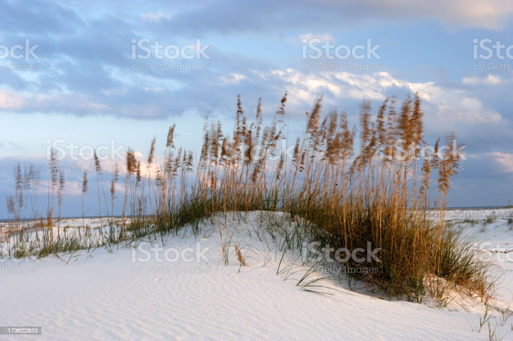Wind-blown dunes stock photo