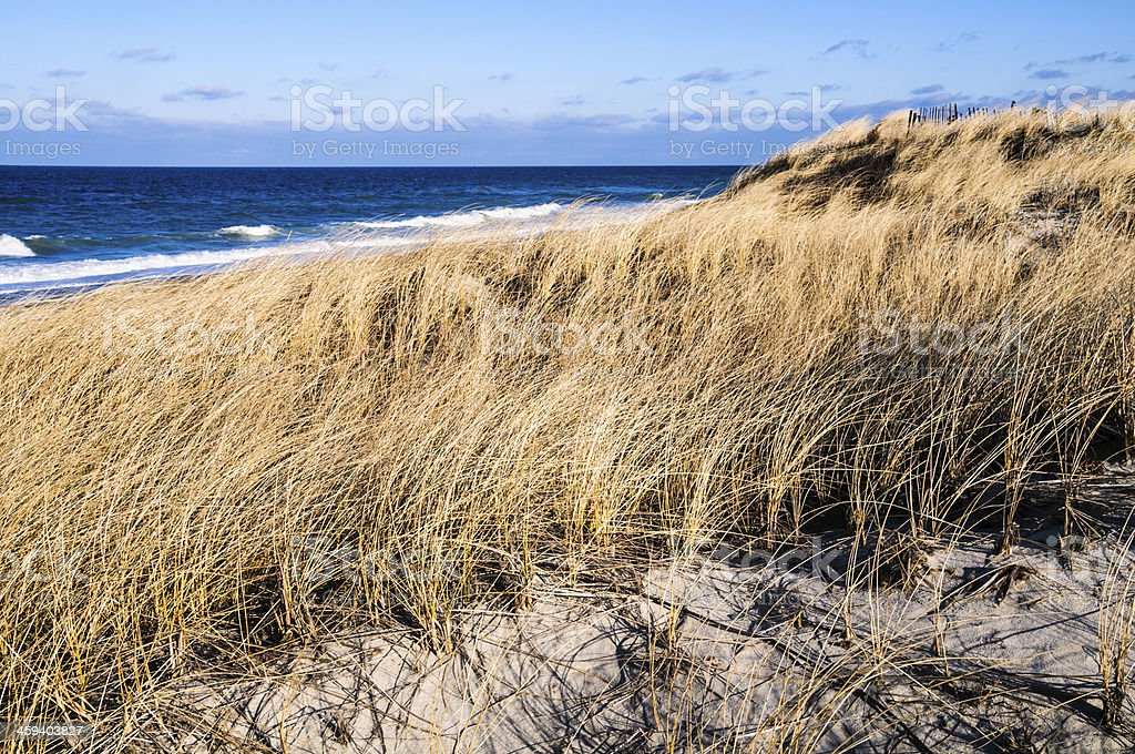 Windblown Grasses royalty-free stock photo