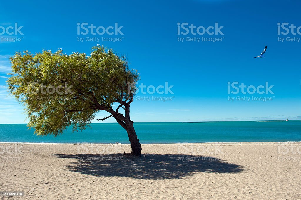 Windblown Tree stock photo