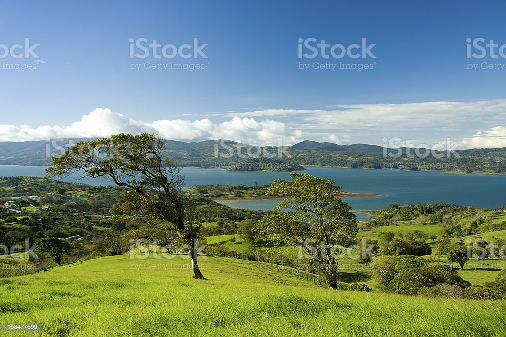 Windblown Trees stock photo