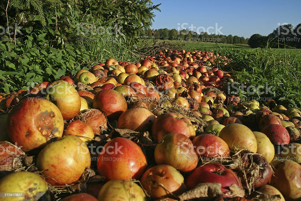 Windfall stock photo