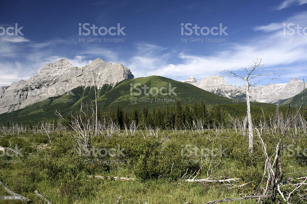 Windfallen trees royalty-free stock photo