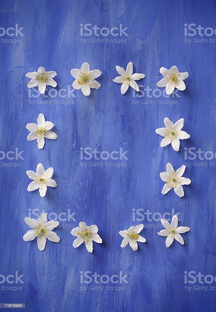 Windflower's Frame royalty-free stock photo