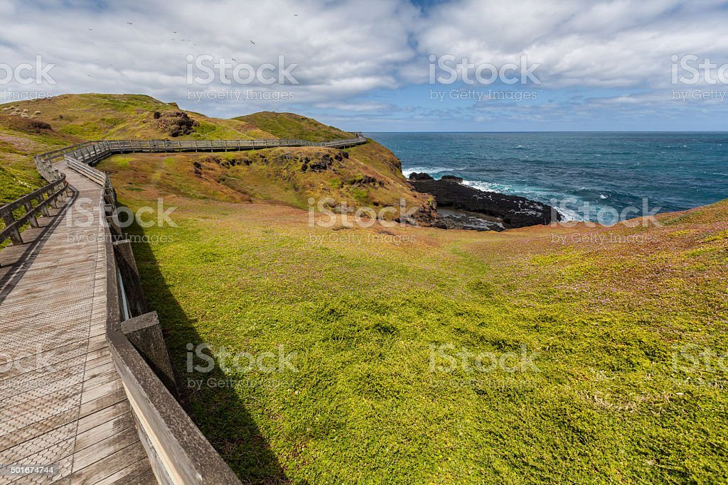 Winding boardwalk among green blossoming hills at the coastline stock photo