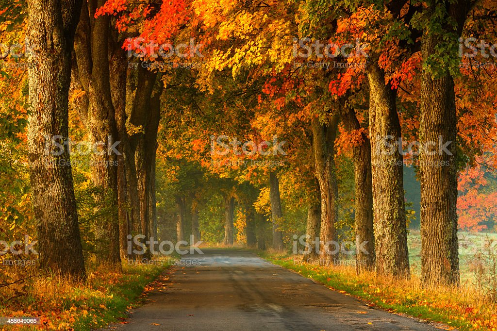 Winding Country Road in Autumn