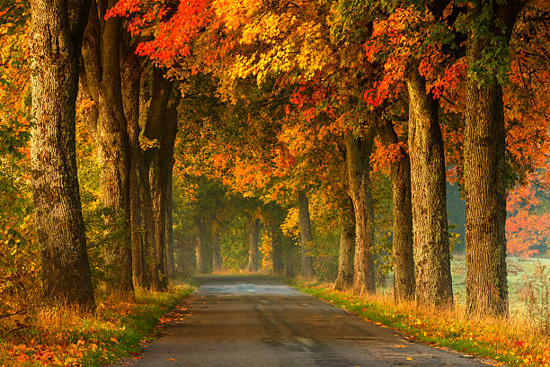route sinueuse en automne - arbre à feuilles caduques photos et images de collection