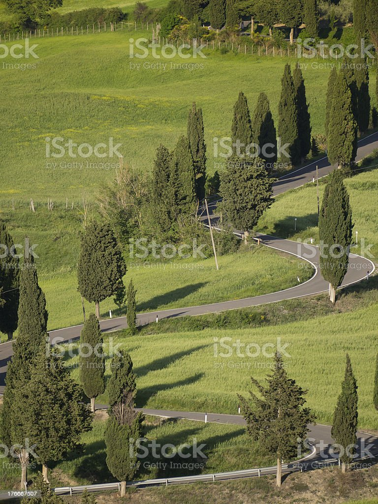 Winding cypress lane in Tuscany royalty-free stock photo