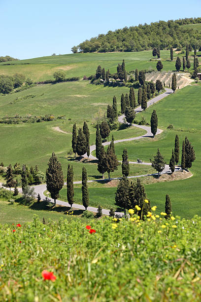 Winding Cypress lined road in Monticchiello, Val d'Orcia Tuscany Italy stock photo