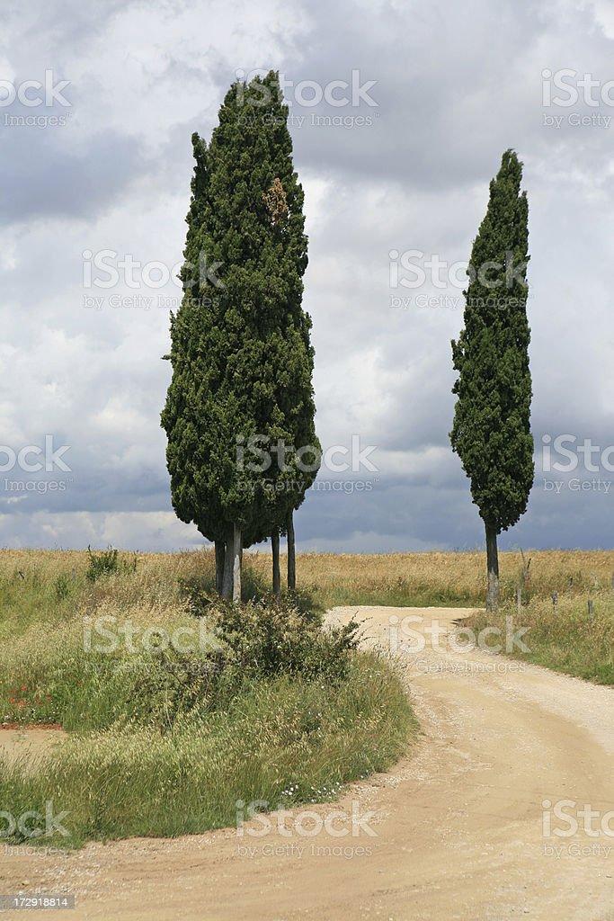 Winding cypress lined road in Tuscany, Crete Senesi Italy royalty-free stock photo