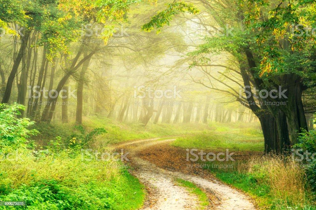 Wanderweg schlängelt sich durch Grünwald im schönen Morgenlicht – Foto