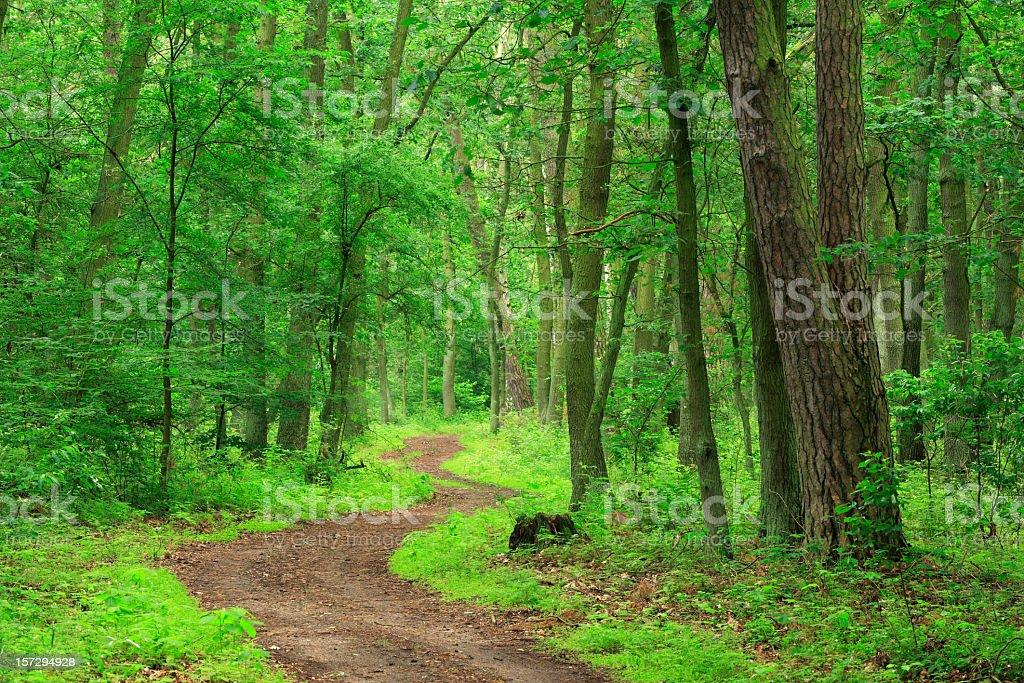 Gewundenen Weg durch den Mischwald der Laubwälder und coniferious Bäumen – Foto