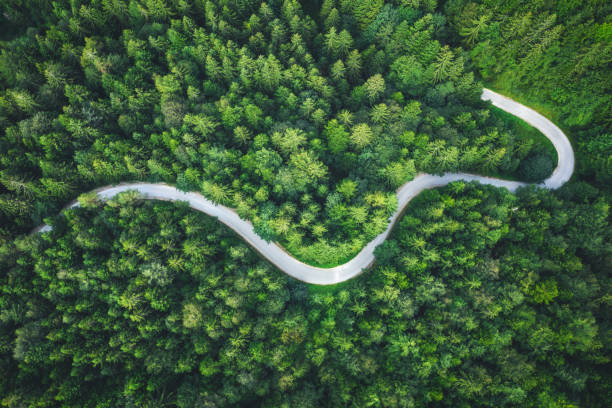 Winding Forest Road stock photo