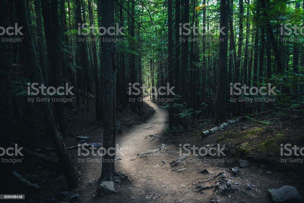 Winding forest trail. - foto de acervo
