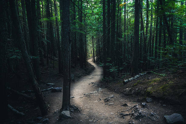 Winding forest trail. stock photo