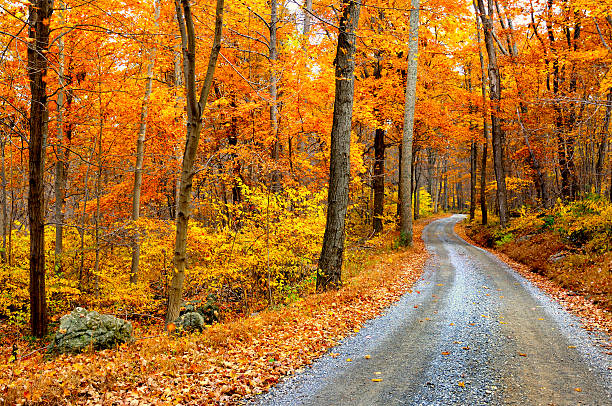 winding mountain road in autumn - deciduous stock pictures, royalty-free photos & images