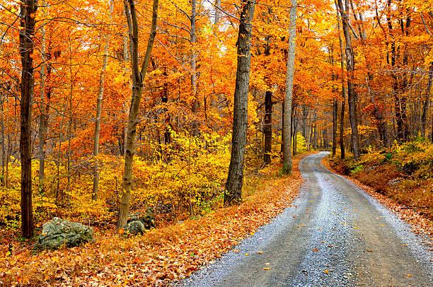 route de montagne sinueuse en automne - arbre à feuilles caduques photos et images de collection
