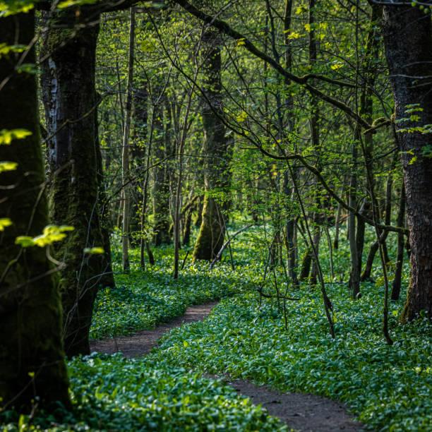 Caminho sinuoso através de uma floresta - foto de acervo