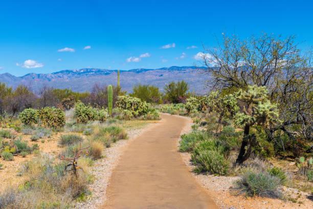 Winding path through the desert of Saguaro National Park stock photo