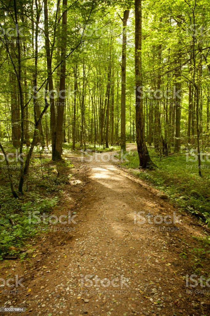 winding pathway in green forest foto de stock royalty-free
