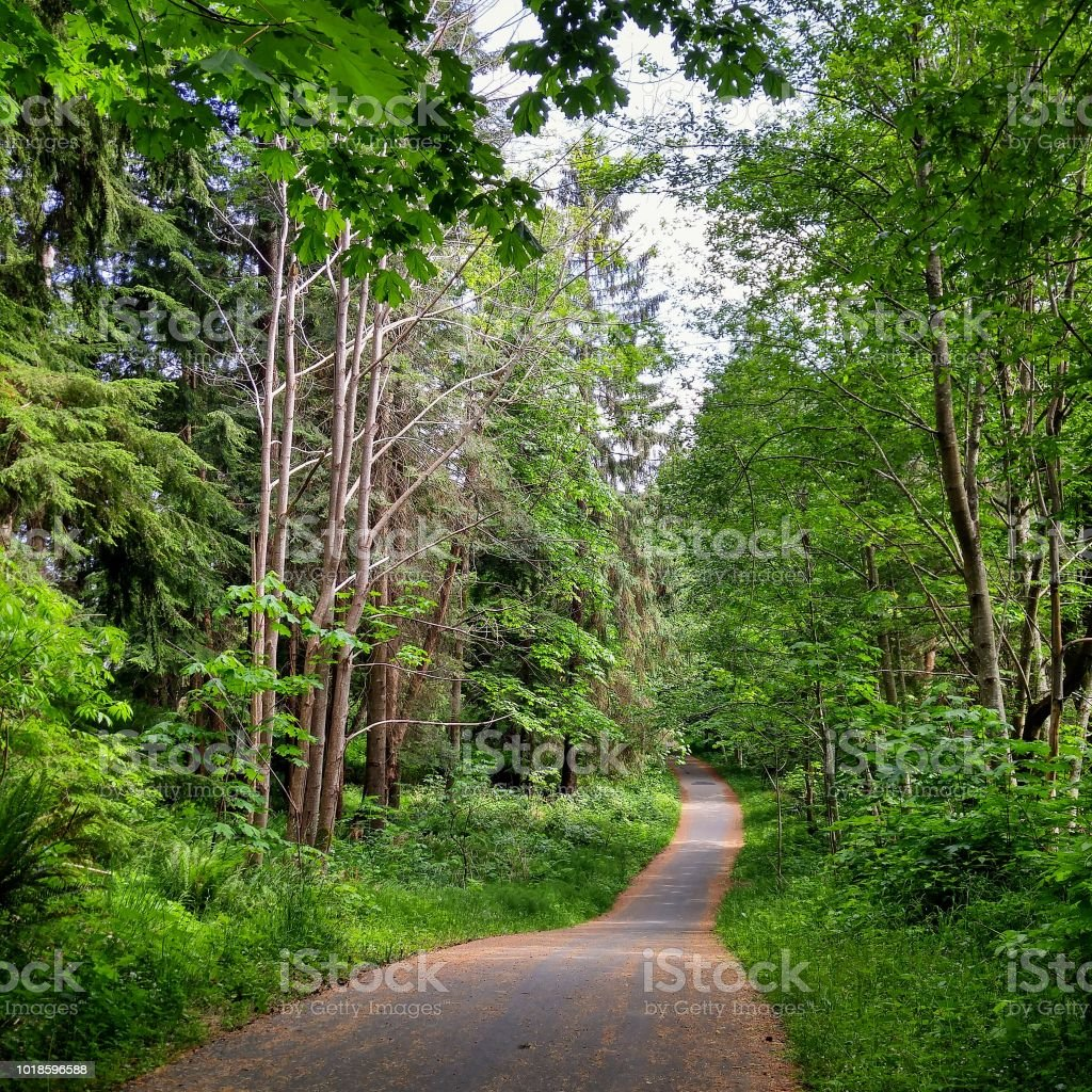 A winding paved path through a forest in a public park stock photo