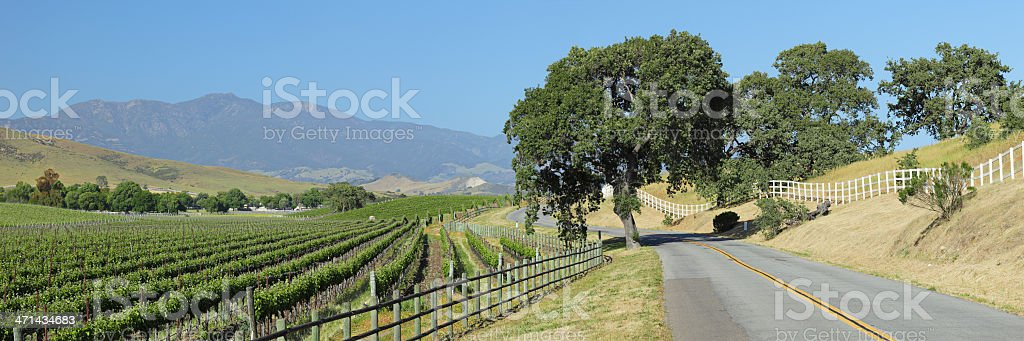 Winding Road and Vineyard royalty-free stock photo