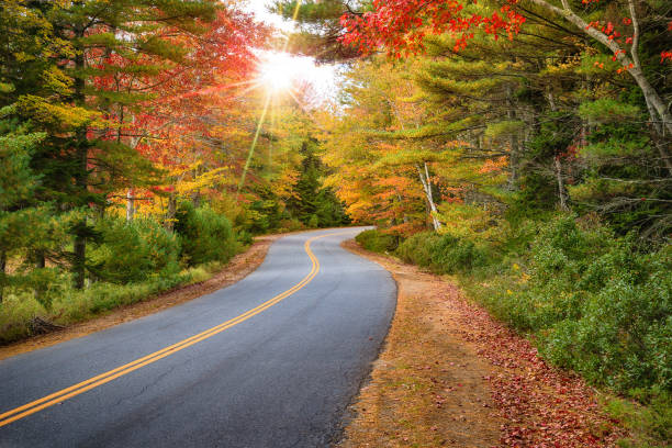 Winding road curves through autumn trees in New England Winding road curves through splendid autumn foliage in New England. Sun rays peeking through colorful trees. autumn leaf color stock pictures, royalty-free photos & images