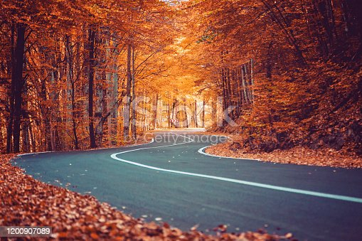 Road passing through the forest. Beautiful autumn landscape.