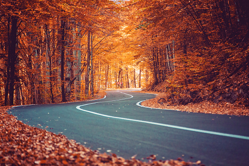 A winding road curves through autumn trees
