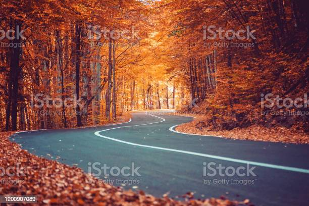Photo of A winding road curves through autumn trees