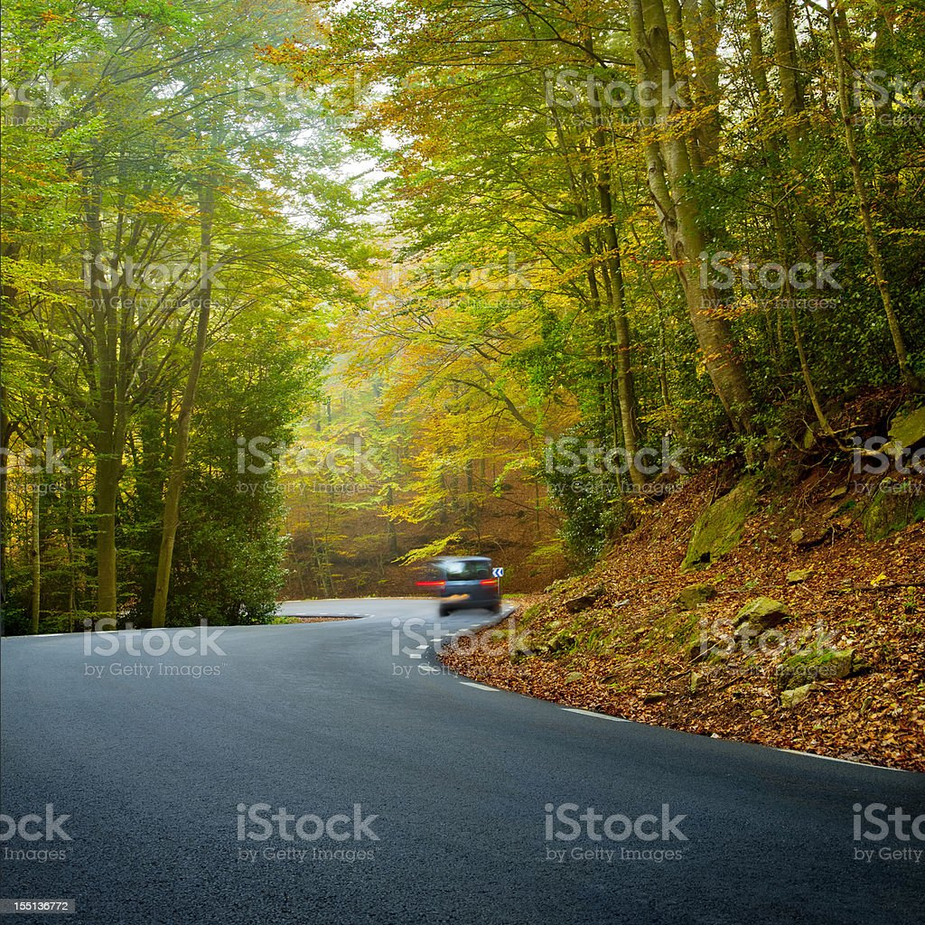 Winding road in a beautiful forest royalty-free stock photo