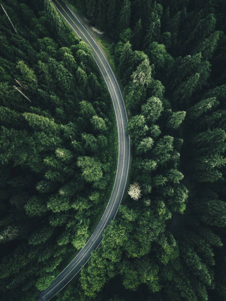 kurvenreiche Straße im Wald auf Nordamerika – Foto