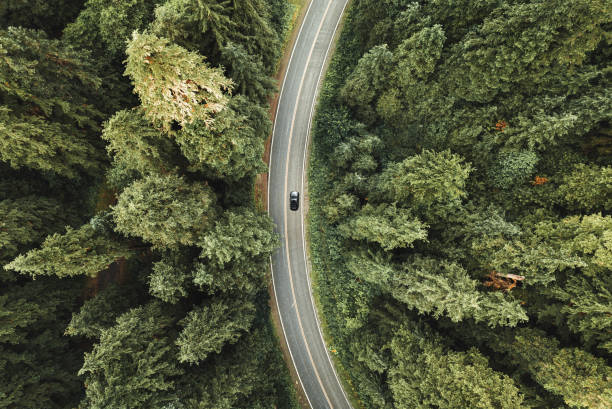 winding road in the forest on north america winding road in the forest on north america drone point of view stock pictures, royalty-free photos & images