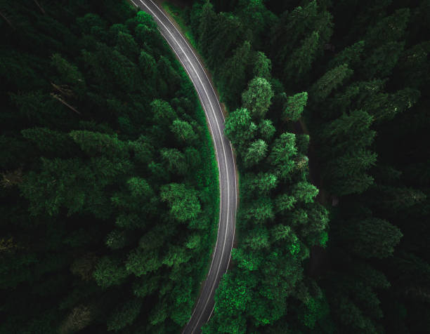 winding road in the forest on north america stock photo