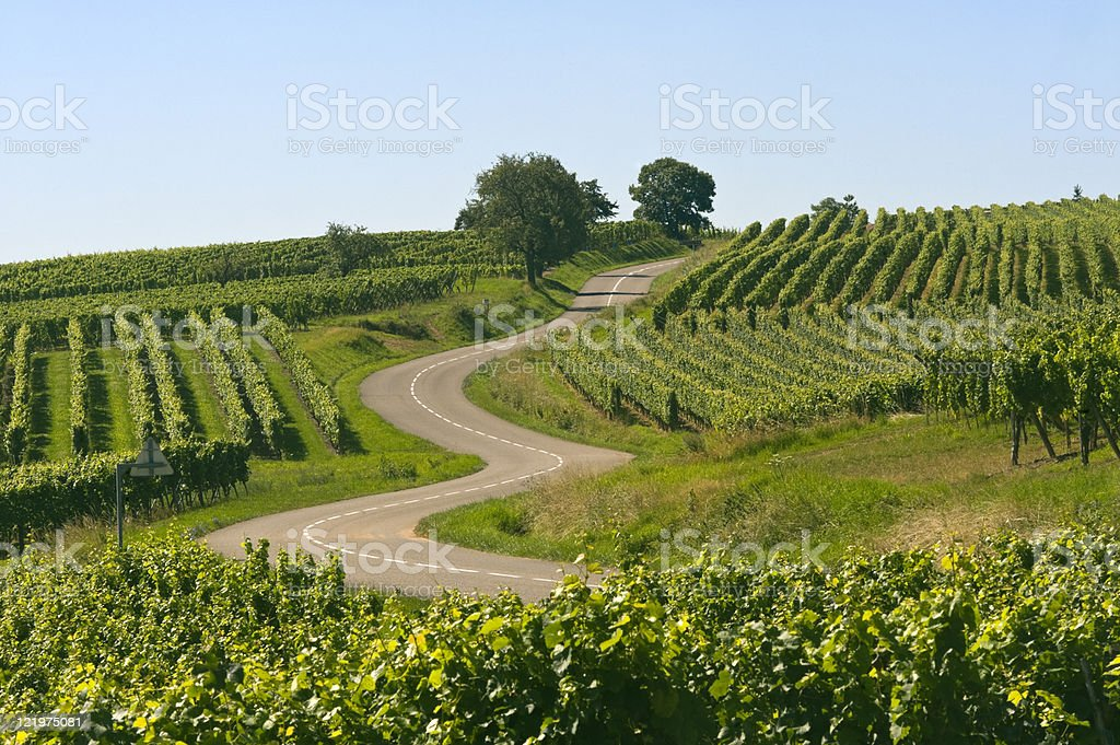 Winding road in the vineyards of Alsace (France) Winding road in the vineyards of Alsace near Itterswiller (Bas-Rhin, France) at summer Agriculture Stock Photo