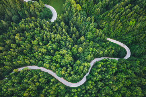Idyllic winding road through the green pine forest.
