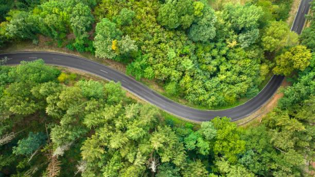 Kurvenreiche Straße durch den Wald – Foto