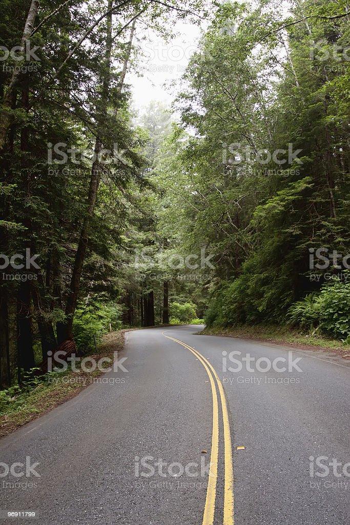 Winding road through redwood trees royalty-free stock photo