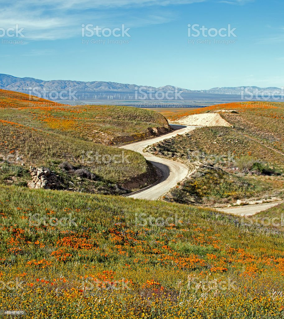Winding road through springtime California Golden Poppies‎ and desert wildflowers stock photo