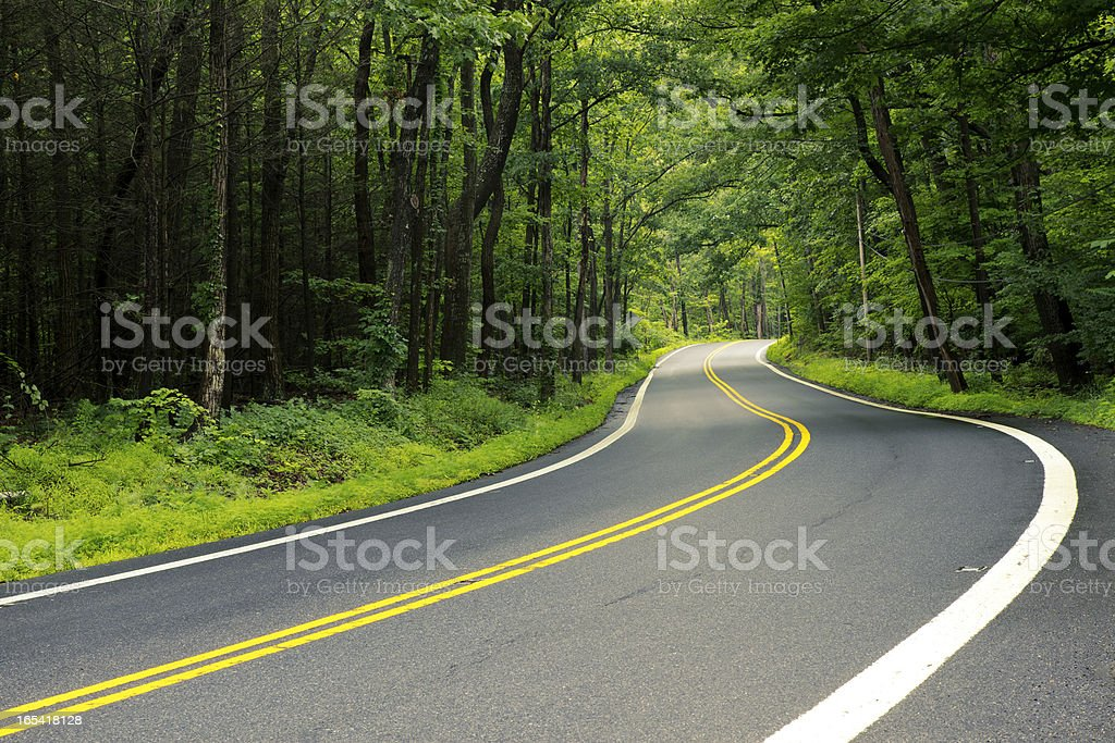 Winding Road Through Thick Forest stock photo