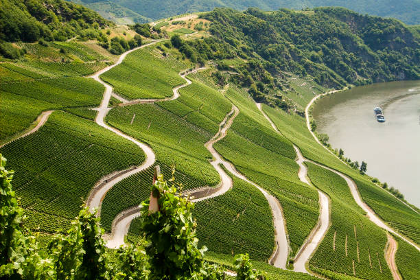 Winding roads Winding roads lead through vineyards on Lake Constance. Bodensee stock pictures, royalty-free photos & images