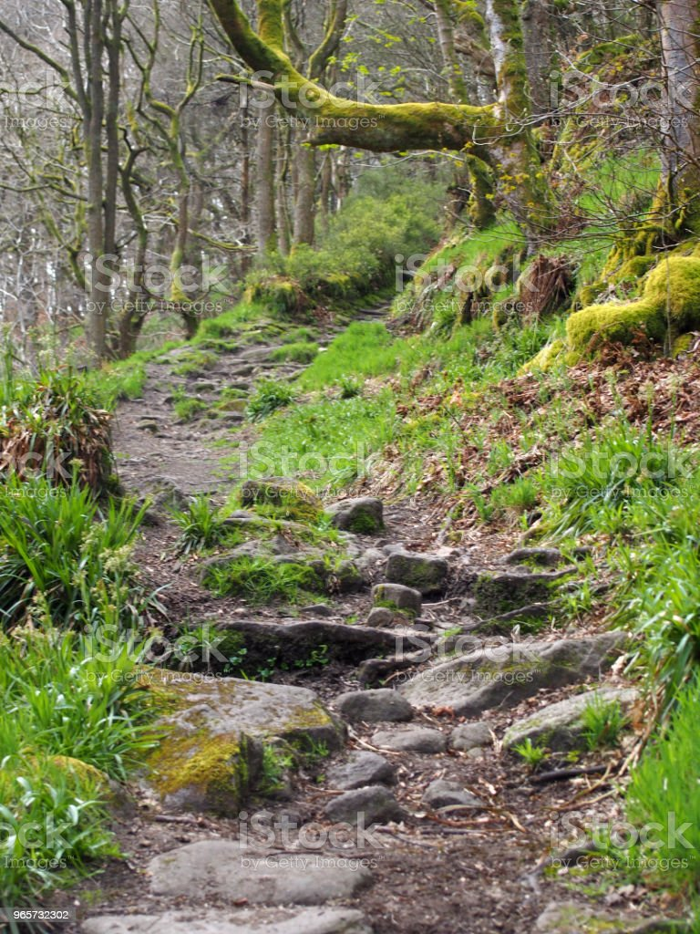 winding rocky forest pathway leading up a steep hill with overhanging mossy trees in dense woodland - Стоковые фото Буковое дерево роялти-фри