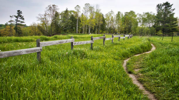winding trail in nature stock photo