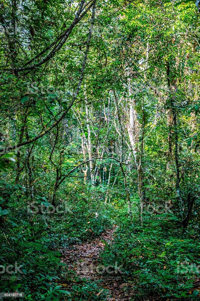 Winding Trail Through Rainforest stock photo